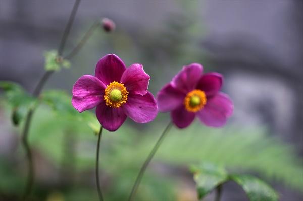 남산을 오르다 만난 꽃