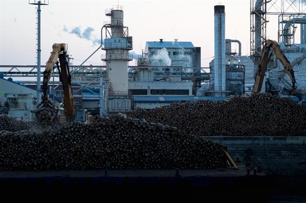 북성포구에 있는 원목 적치장 세계 여러나라에서 수입한 원목을 적재하고 가공하는 곳.