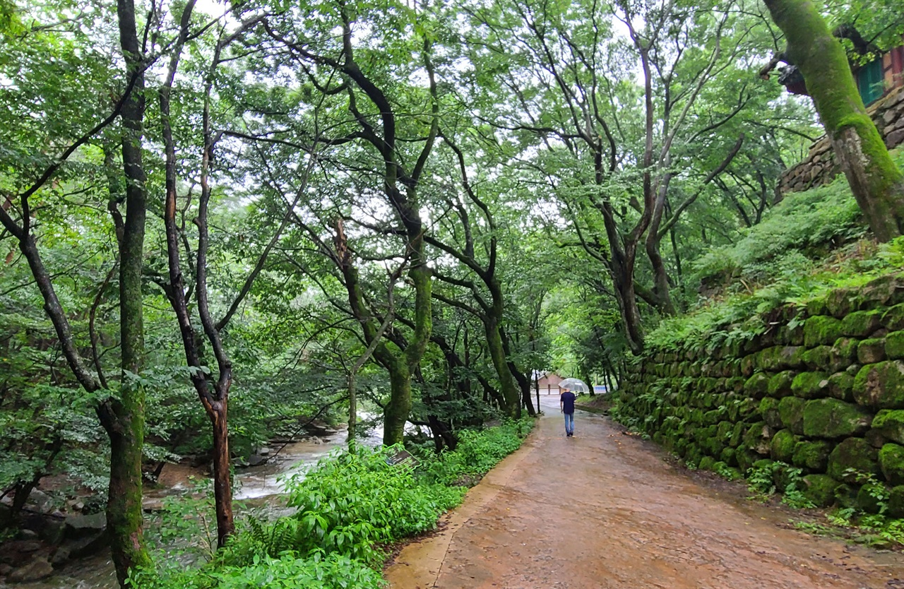 지난 여름 비가 내리는 날의 도림사 계곡 풍경이다. 절집도, 숲길도, 계곡도 아름다운 동악산 도림사다.