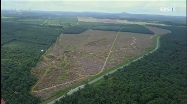 EBS <다큐프라임> '인류세-닭들의 행성' 편의 한 장면