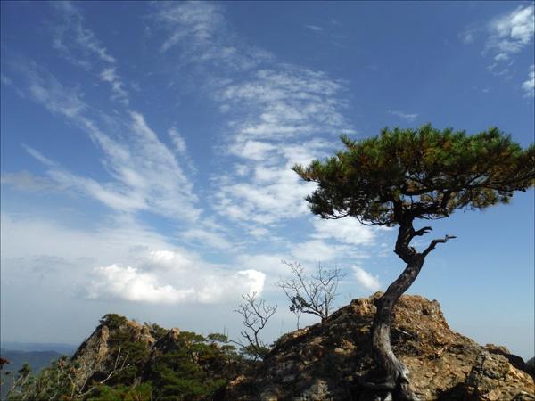 거친 바위, 단아한 나무 한 그루, 그리고 하얀 구름이 어우러져 하나의 멋스런 풍경이 되고.