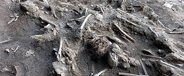 20일 대전 골령골 유해발굴 현장에서 드러난 뼛 더미. 불과 3.8제곱미터에 몰려 있었고 ,헝크러진 실타래처럼 어지럽게 엉켜 있었다. 마치 쌓아놓은 장작더미가 무너져 내린 듯 어지럽게 널려 있다.
