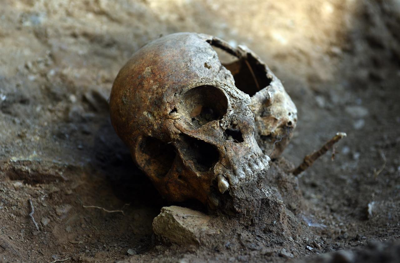 20일 드러난 뼛 더미 인근에서는 비교적 온전한 형태의 두개골이 발굴됐다. 골령골의 경우 놓은 산성도와 습기로 대부분의 유해가 삭아 없어진 상태다.