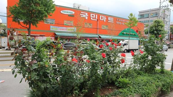 옛 장미원 근처 도로의 장미 화단 장미를 가꾸는 것으로 이곳에 예전에 장미원이었음을 알려준다.