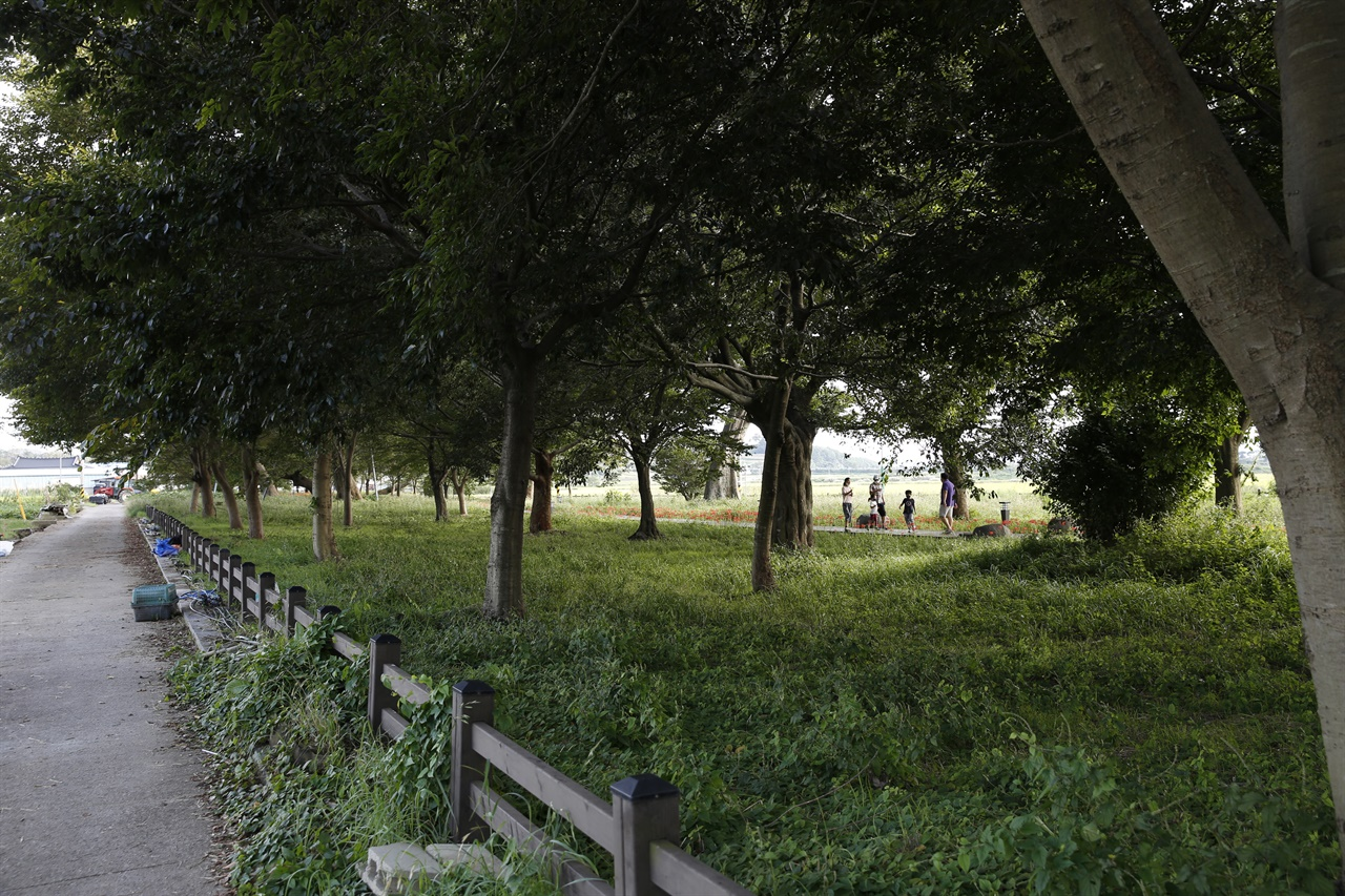 함평 향교마을숲. 마을주민과 수백 년을 함께 해 온 숲이다.