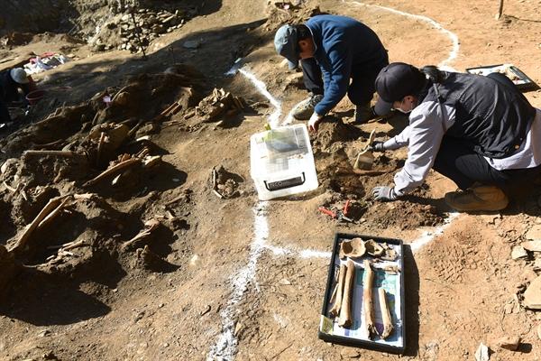 23일  대전 골령골 제1집단 희생 추정지에서 한국전쟁기 민간인학살 유해발굴 공동조사단이 드러난 유해를 조심스럽게 수습하고 있다.