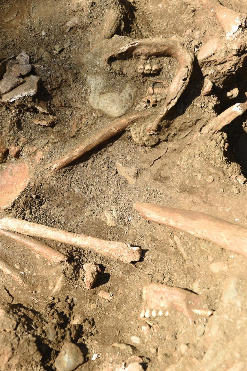 대전 골령골 제 1집단희생지에서 발굴된 희생자 유해. 8.6㎡ 좁은 면적에 30여 구가 뒤엉켜 있다.