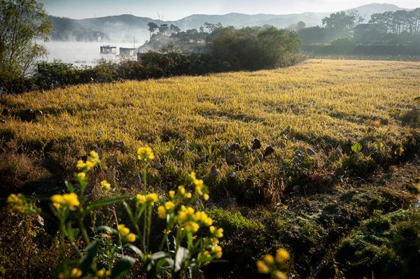고삼호수 꽃뫼마을