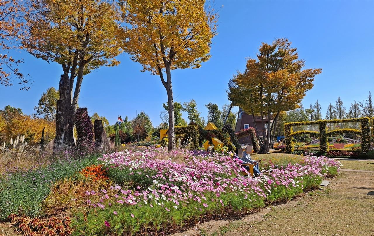 코스모스 꽃밭에서 연인들이 속삭이고 있다.