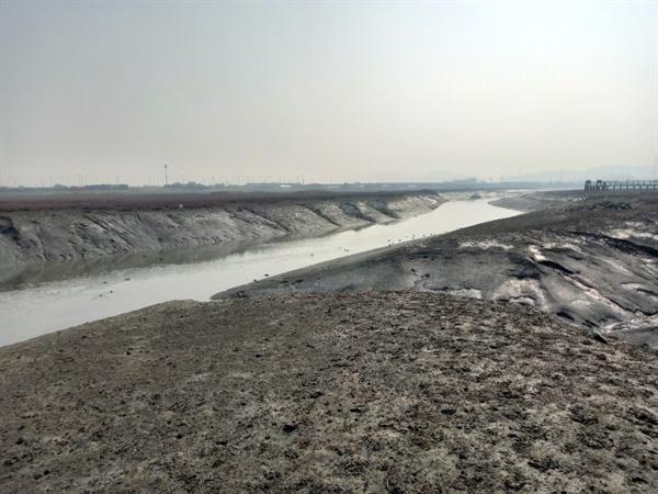 인천 앞바다 갯벌 어마어마한 조수간만의 차이를 자랑하는 인천 갯벌, 생태계의 보고다