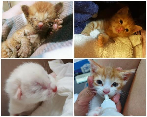 꼬물꼬물 채 눈도 못 뜬 아기 고양이들 소식은 지난 두 달간 유난히 많았다.