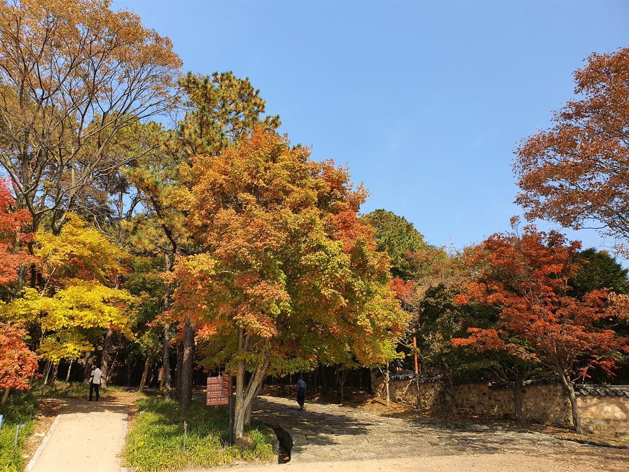 부소산성 입구 부소산성 입구에서부터 노오란 가을을 만난다