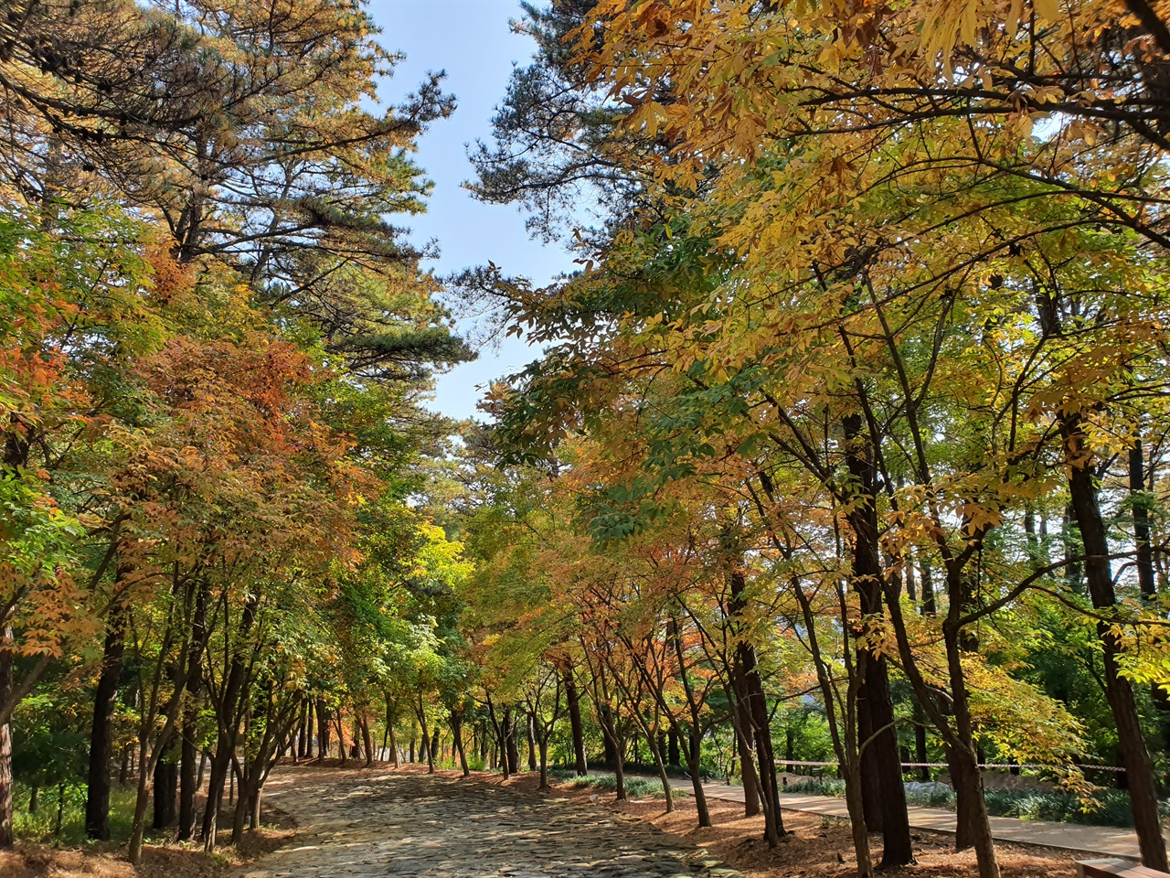 천년의 숲. 백제 왕족의 후원다운 기품이 느껴지는 단풍 숲