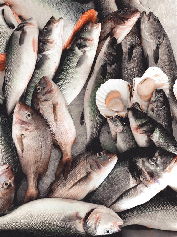 오늘날 어업으로 거둬들이는 물고기의 3분의 1은 양식장에서 기르는 물고기의 사료로 쓰이고 있다