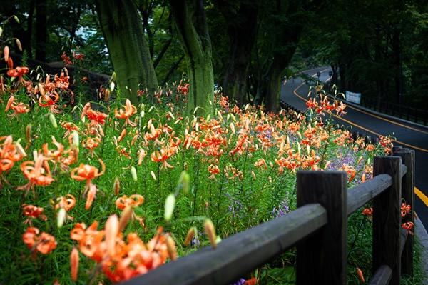 남사산공원