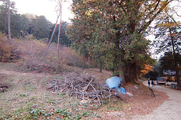 끝까지 전향을 거부한 여자 빨치산이 마지막으로 '울밑에선 봉선화'를 부르다가 처형된 자리로 토벌대들은 나무들이 쌓인 뒤쪽 숯가마속으로 시체를  던져 버렸다.