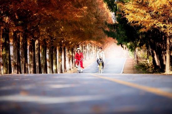 진안 모래재 메타세쿼이아 길에서 자전거를 타며 잠깐 모델로 카메라 앞에 섰던 임지윤 기자.