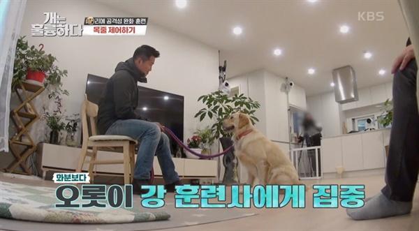 16일 방송된 KBS2 <개는 훌륭하다>의 한 장면