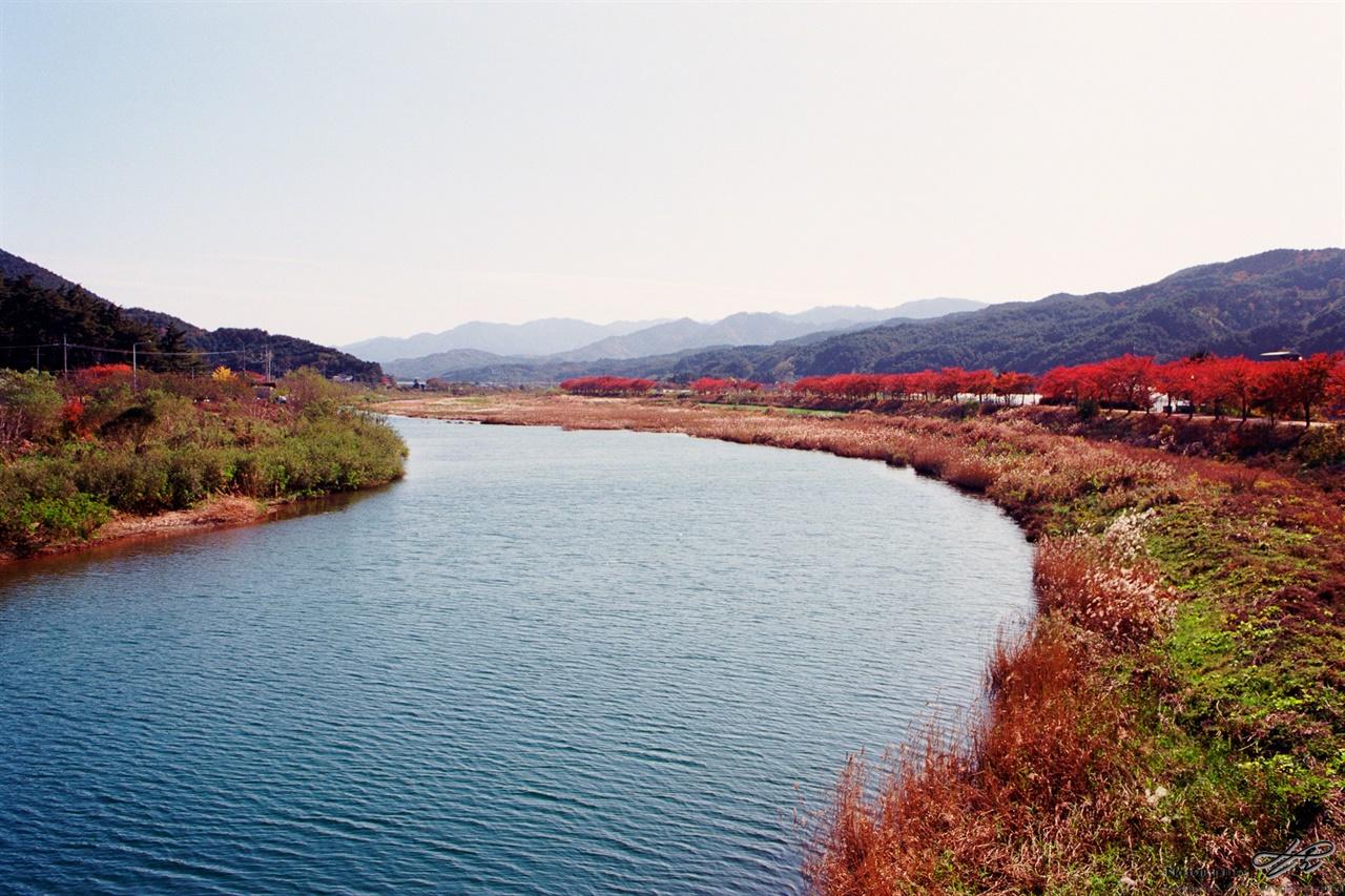 마읍천의 가을 (MZ-S/Ektar100) 응봉산에서 곧바로 흘러내려오는 맑은 물. 산란철이 되면 연어가 거슬러 올라간다고.