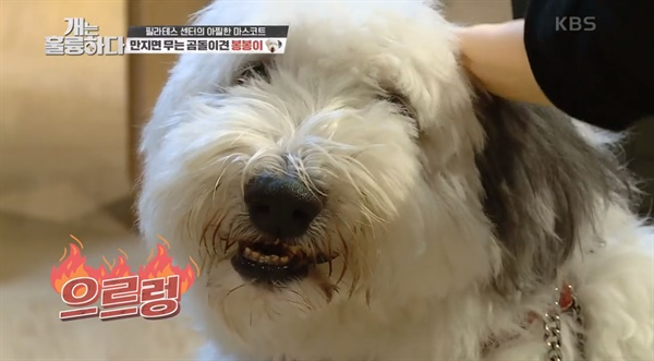 KBS2 <개는 훌륭하다>의 한 장면