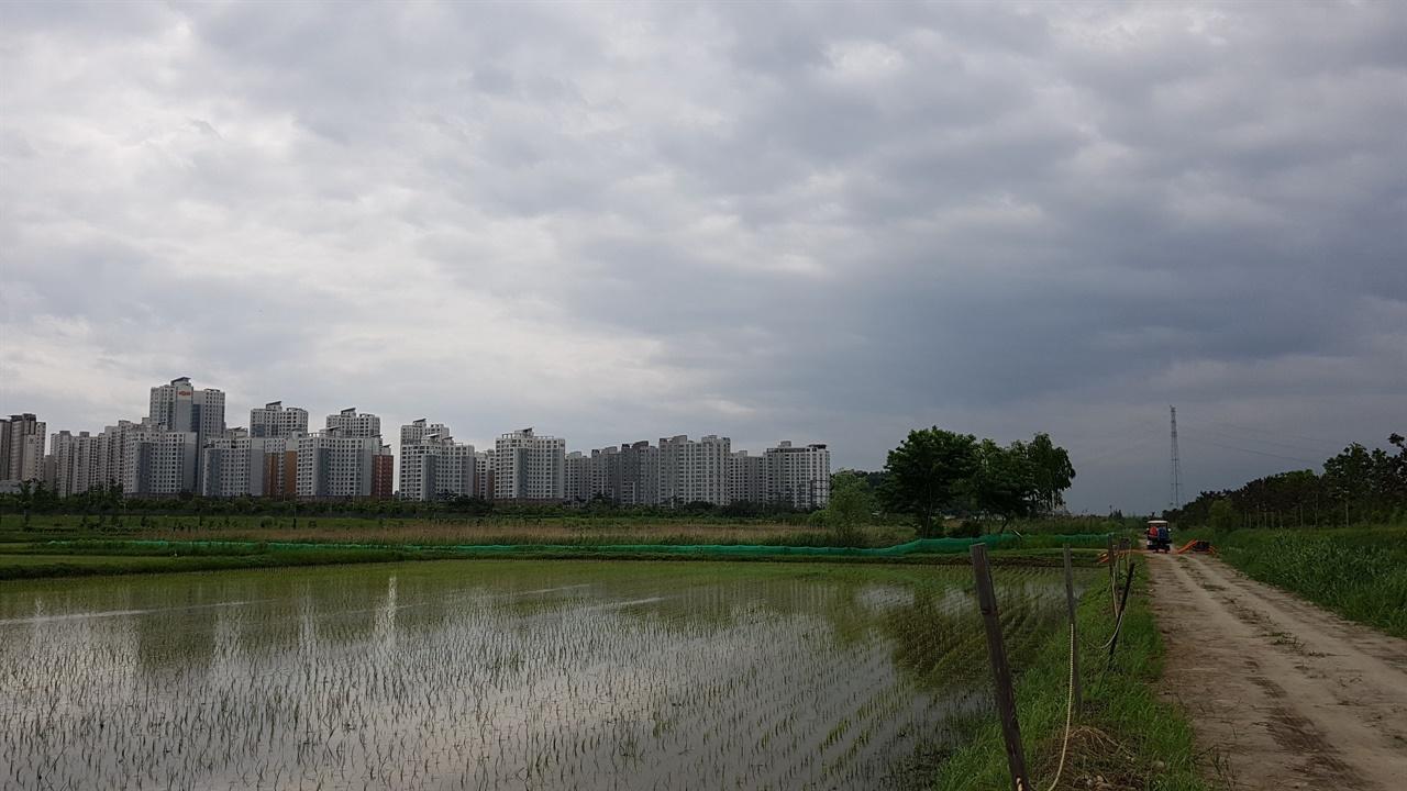 김포조류생태공원 운정3지구 택지개발과정에서 발견된 금개구리가 임시 이주해 있는 곳