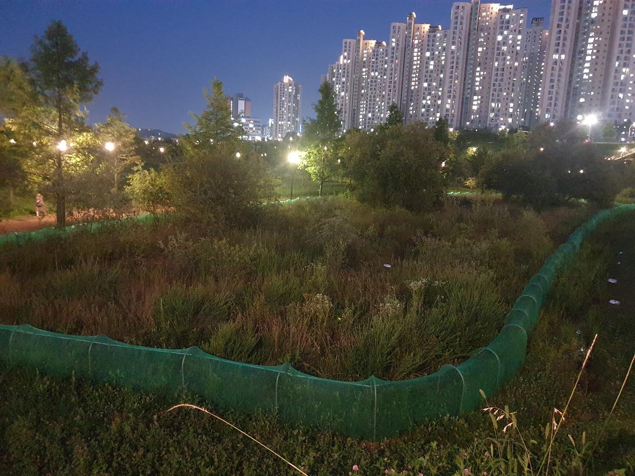 운정호수공원 맹꽁이 대체서식지 운정3지구 택지개발도중 발견된 맹꽁이 959개체가 이주해 있는 운정호수공원
