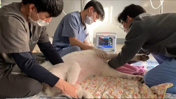 나모는 하루에도 수십번씩 발작을 한다.