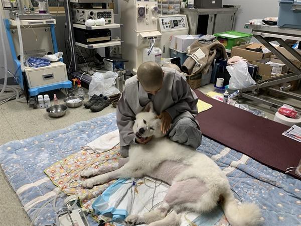 충남대 동물병원에서 치료를 받고 있는 나모