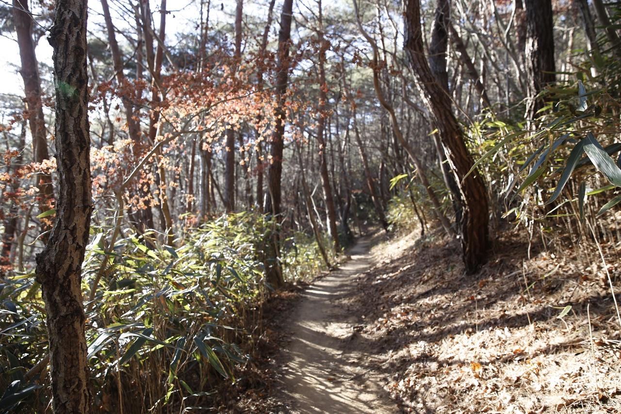 불일암과 송광사를 이어주는 숲길. 생전의 법정스님도 자주 다녔던 길이다.