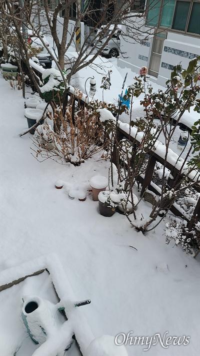 밤사이 폭설로 눈이 쌓인 7일 오전 대전 서구 변동