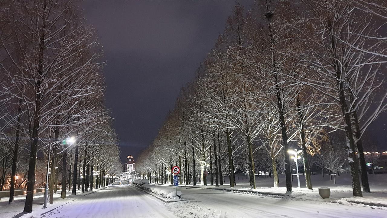 눈 내린 전남대학교 풍경. 광주역에서 나와 집으로 가는 길, 대학 캠퍼스로 돌아서 가는 길이다.