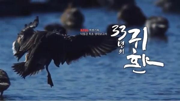 KNN특별기획 낙동강 최초 생태보고서 <33년의 귀환>(12/17)