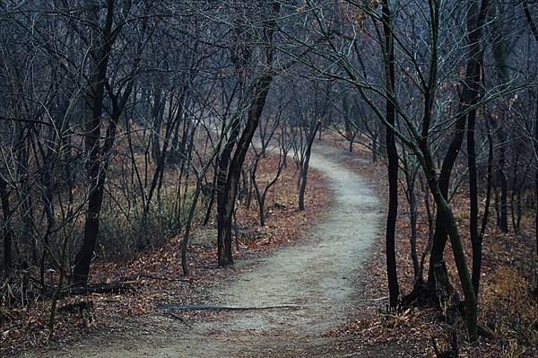 봉산 산책길 풍경