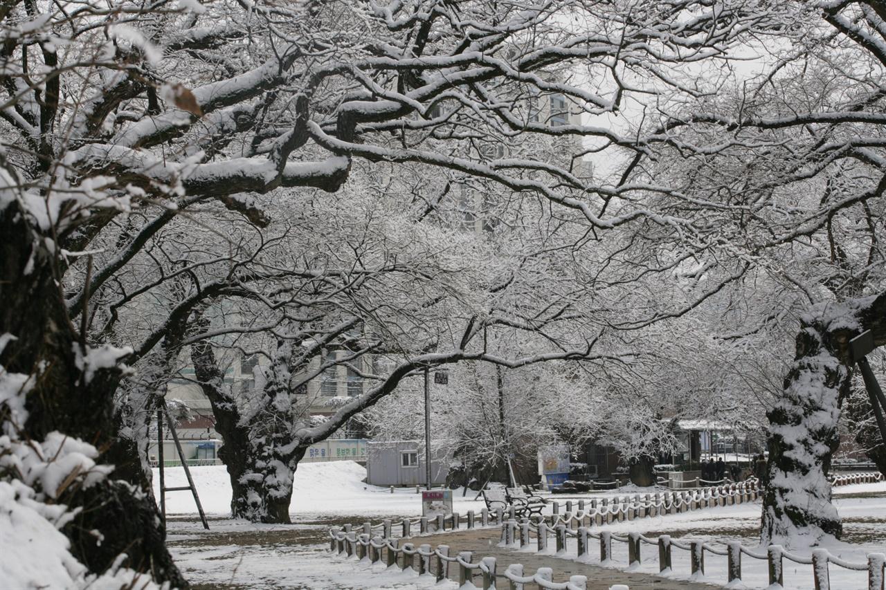 성주군의 언택트 관광지 성밖숲에 하얀 눈이 쌓였다.
