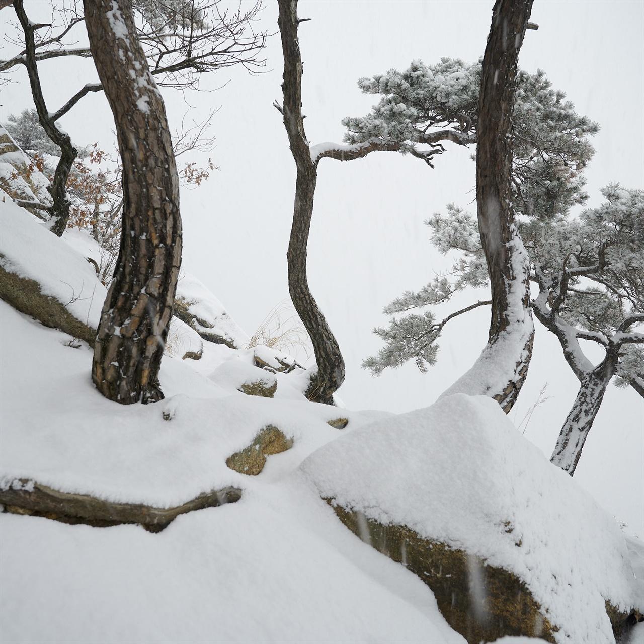 같은 방향을 향해 파도 모양을 이루며 서있는 이 세 그루의 나무를 보라, 아무래도 같은 가족인 듯하다.