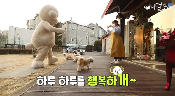 KBS2 <류수영의 동물티비> 갈무리