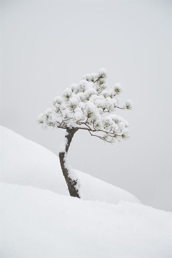 등산의 목적이자, 이번 촬영 글의 주제인 소박함과 차분함을 조용하게 보여주고 있는 나무.