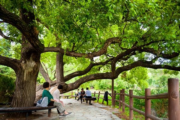 정자 아래의 시원난 나무그늘. 보라매공원 내부의 옥만호와 음악분수 사이의 쉼터.