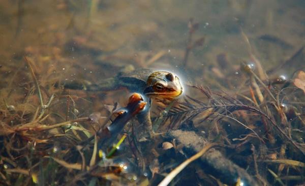 어느덧 소리 없이 다가온 경칩(驚蟄)인 5일, 유난히도 추웠던 지난 겨울, 개구리가 겨울잠에서 깨어났다.