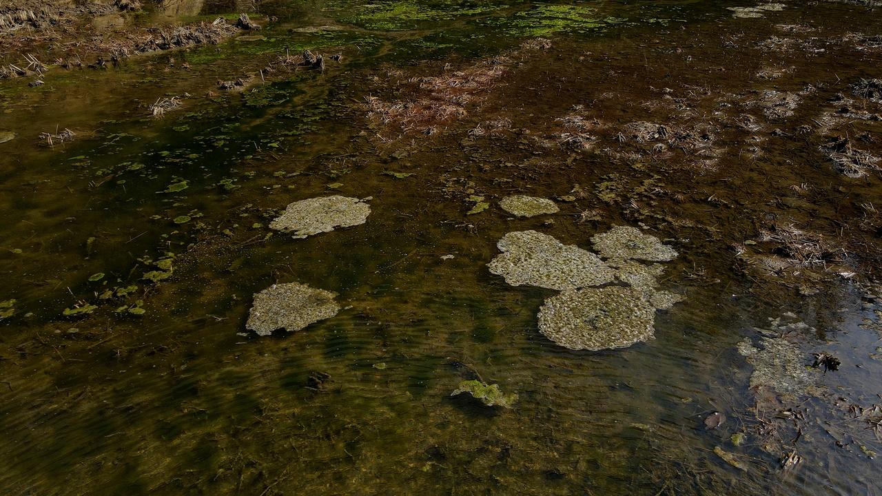 개구리 알의 부화 따뜻한 오후