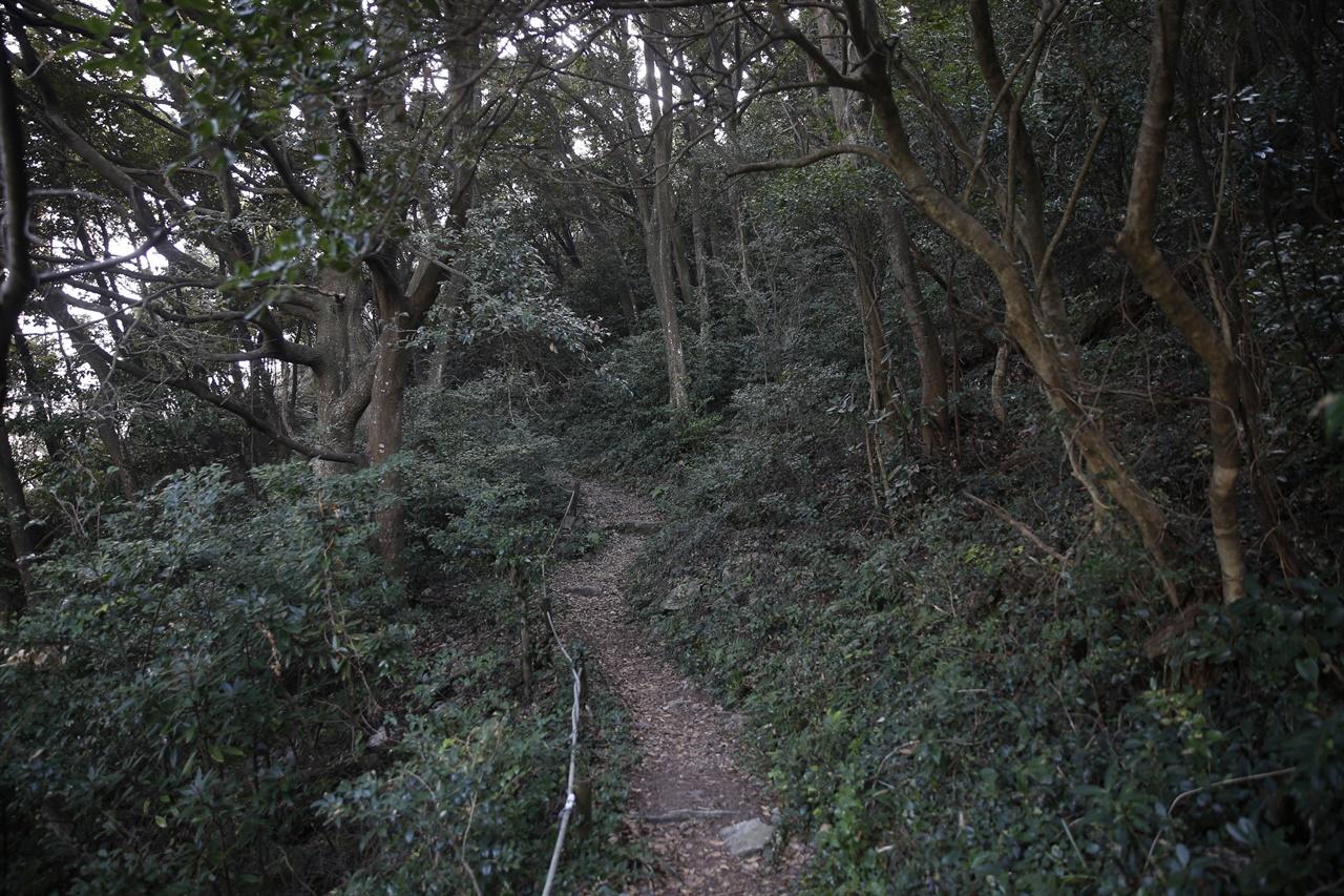 꽁돌과 꽁묘에서 하늘다리로 가는 해안 숲길. 후박나무와 동백나무가 유난히 많이 서식하고 있다.
