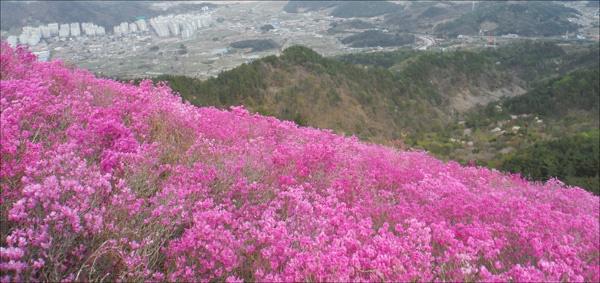 봄바람에 출렁이는 진달래 꽃밭에 파묻혀 달콤한 봄꿈에 빠져들고 싶었다.