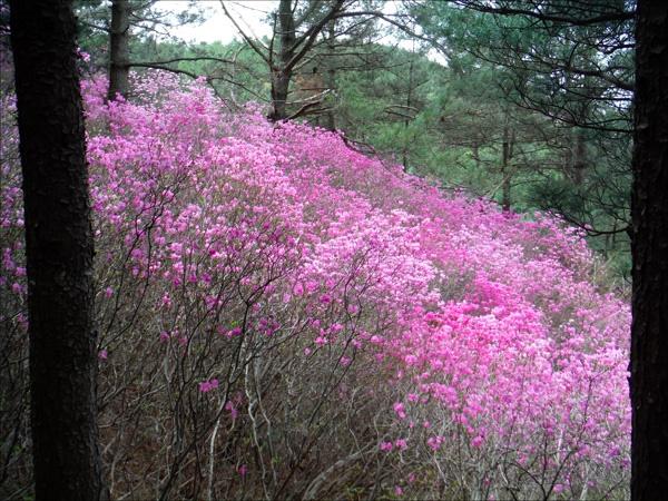 연분홍 물감 풀어 키 큰 나무들 사이사이에 색칠해 놓은 듯한, 그림 같은 풍경에 취하고.