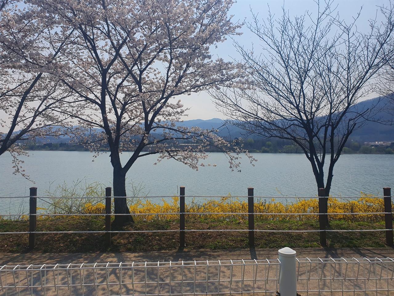 들꽃수목원의 화사한 봄 풍경 들꽃수목원의 벤치에 앉아 한없이 남한강을 바라보면 세상근심이 모두 사라진다. 화사한 봄꽃의 풍경에 나의 마음도 한 없이 녹는다.