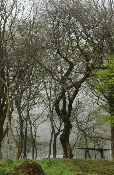 백암 아름다운 숲 1