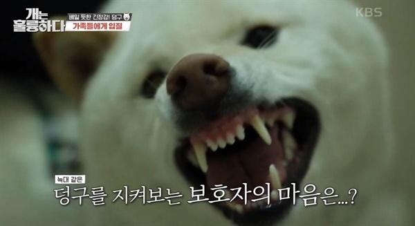 지난 5일 방송된 KBS2 <개는 훌륭하다>의 한 장면