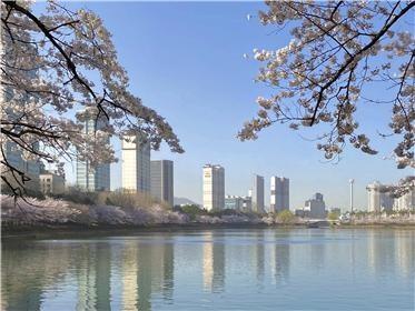 3월 30일에 벚꽃 핀 석촌호수
