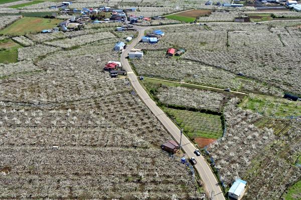 나주시 금천면 배밭 마을길 주변으로 배밭이 늘어서 있다.