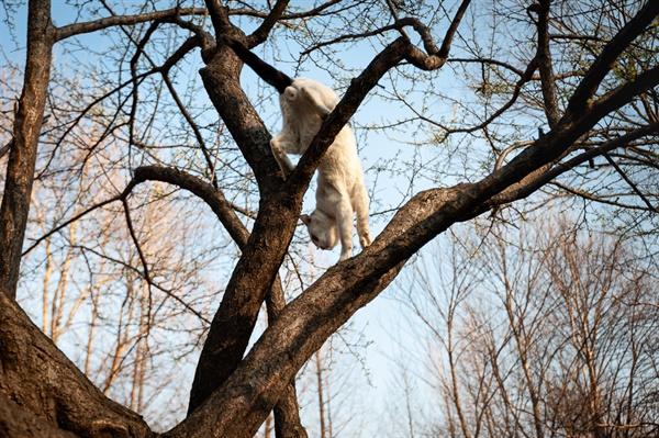 나무타기를 즐기는 고양이. 양재시민의숲에서 만난 아크로바틱 고양이.