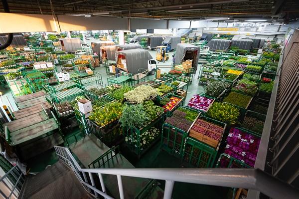 양재동꽃시장(aT 화훼공판장) 내부. 경매가 끝난 뒤 화분을 차에 옮기고 있는 장면.